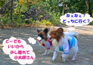 yuzukota061105-2.jpg