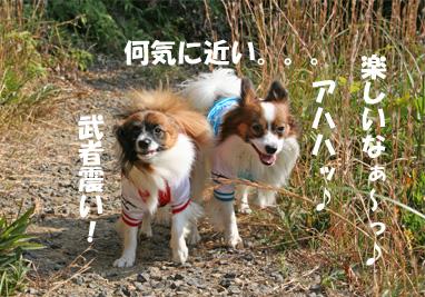 yuzukota061105-3.jpg