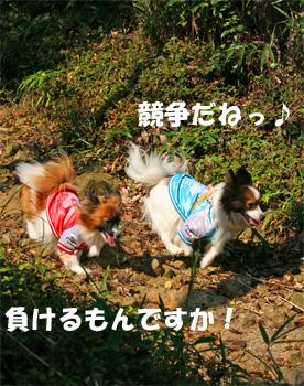 yuzukota061105-4.jpg