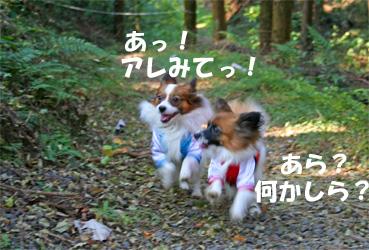 yuzukota061105-5.jpg
