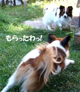 yuzukota061108-4.jpg