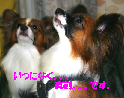 yuzukota061113-2.jpg