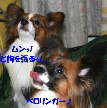 yuzukota061113-3.jpg