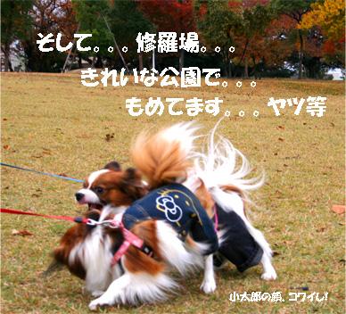 yuzukota061120-3.jpg