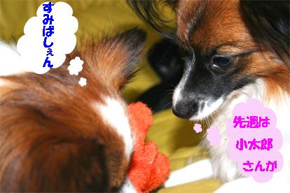 yuzukota061127-1.jpg