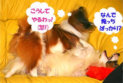 yuzukota061127-2.jpg