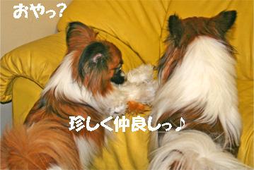 yuzukota061128-1.jpg