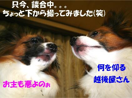 yuzukota061128-2.jpg