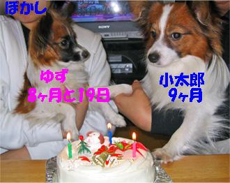 yuzukota061128-3.jpg