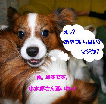 yuzukota061130-1.jpg