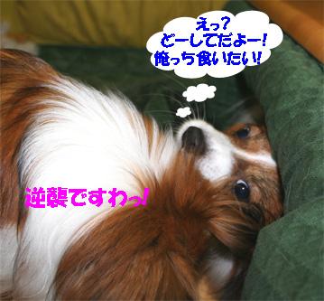yuzukota061130-2.jpg