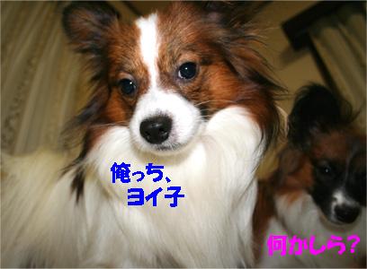 yuzukota061130-3.jpg
