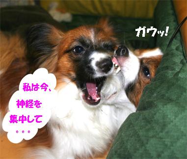 yuzukota061130-4.jpg