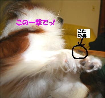 yuzukota061130-5.jpg