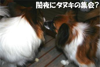 yuzukota061204-1.jpg