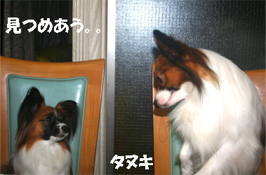 yuzukota061204-2.jpg