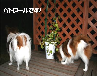 yuzukota061204-3.jpg