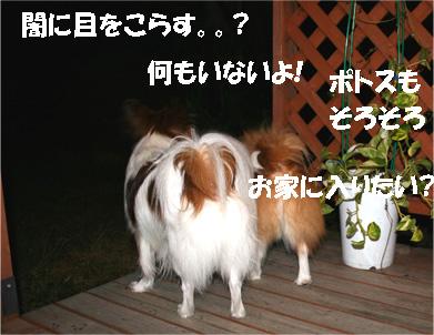 yuzukota061204-4.jpg