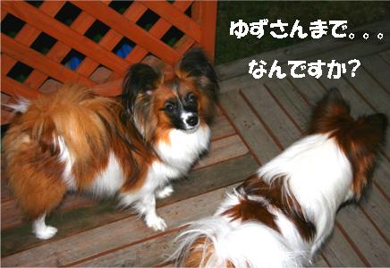 yuzukota061204-5.jpg