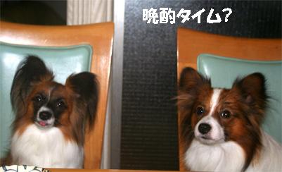 yuzukota061204-6.jpg