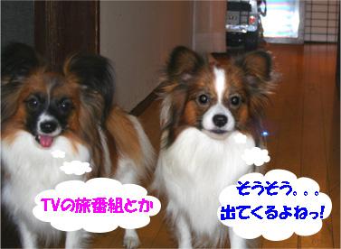 yuzukota061205-2.jpg