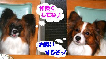 yuzukota061207-1.jpg