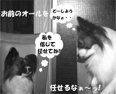 yuzukota061214-1.jpg