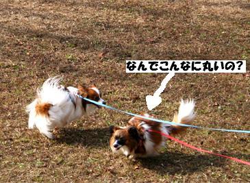 yuzukota061218-1.jpg