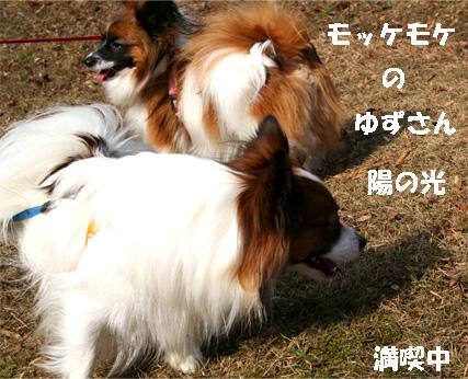 yuzukota061218-2.jpg