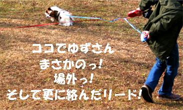 yuzukota061218-4.jpg