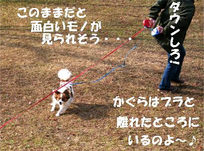 yuzukota061218-6.jpg
