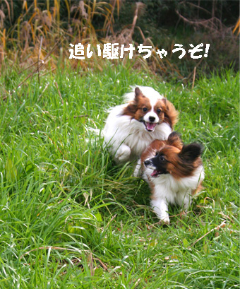 yuzukota061219-1.jpg