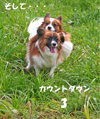 yuzukota061219-2.jpg