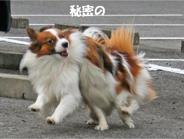 yuzukota061222-1.jpg