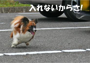yuzukota061222-10.jpg