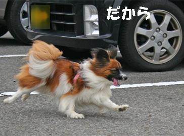 yuzukota061222-11.jpg