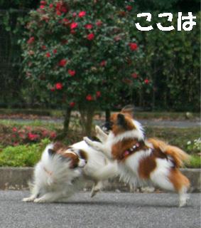 yuzukota061222-12.jpg