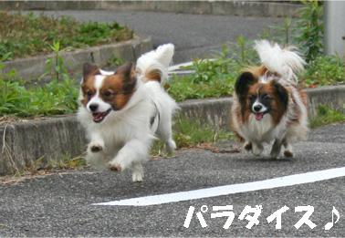 yuzukota061222-13.jpg