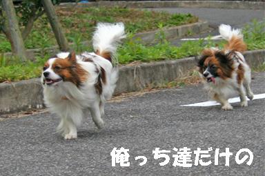 yuzukota061222-14.jpg