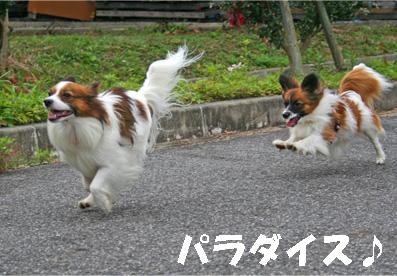 yuzukota061222-15.jpg