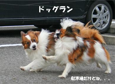 yuzukota061222-2.jpg