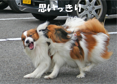 yuzukota061222-3.jpg
