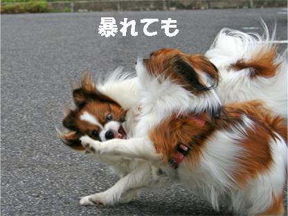 yuzukota061222-4.jpg