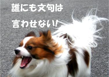 yuzukota061222-5.jpg