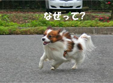 yuzukota061222-6.jpg