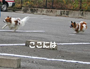 yuzukota061222-7.jpg