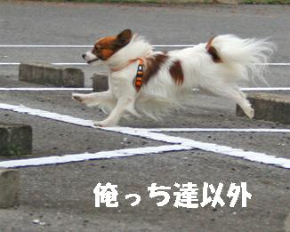 yuzukota061222-8.jpg