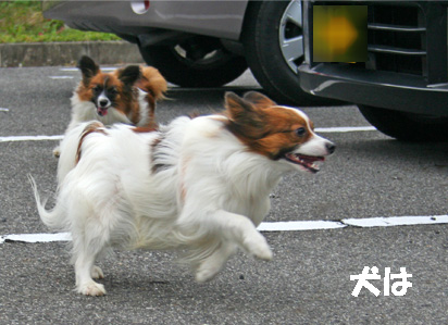 yuzukota061222-9.jpg