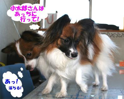 yuzukota061223-1.jpg