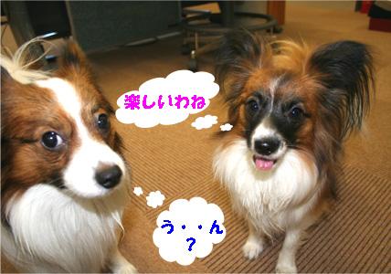 yuzukota061223-2.jpg